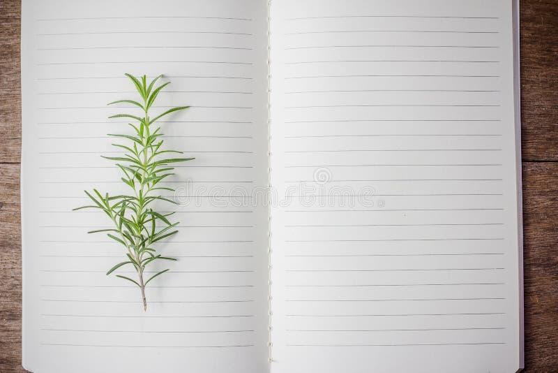 Open receptenboek met verse rozemarijn stock foto
