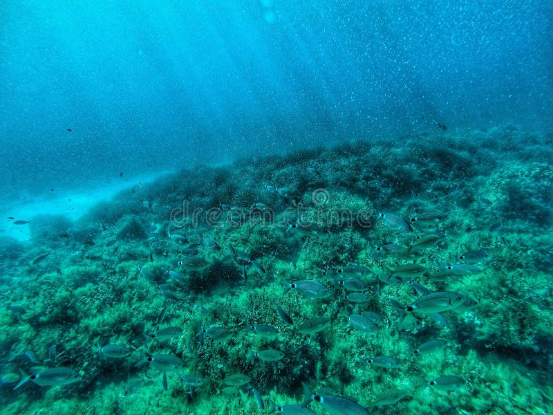 Open seabed. Seabed with marine life on it with light fall coming from above stock photography