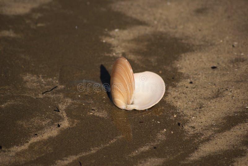 Open shell royalty-vrije stock foto