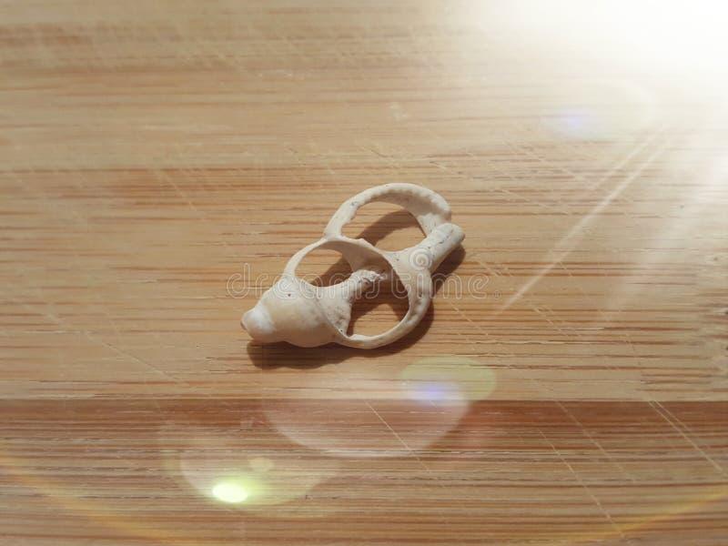 Open shell met licht stock foto