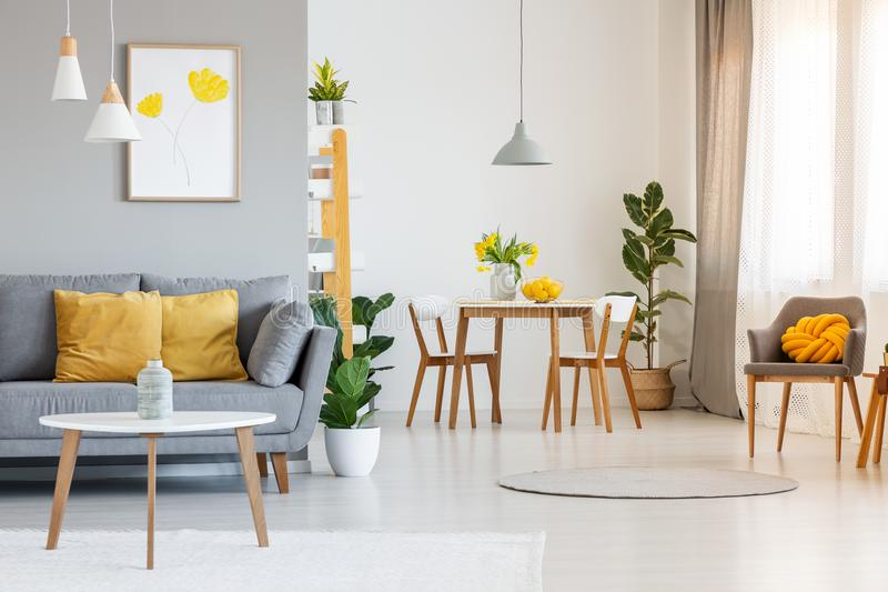 Open space living and dining room interior with gray sofa, wooden tables, white chairs and plants. Real photo stock images