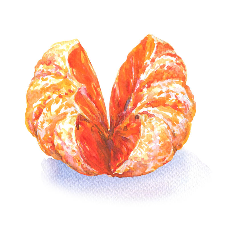 Open tangerine or orange fruit isolated on white, watercolor illustration vector illustration