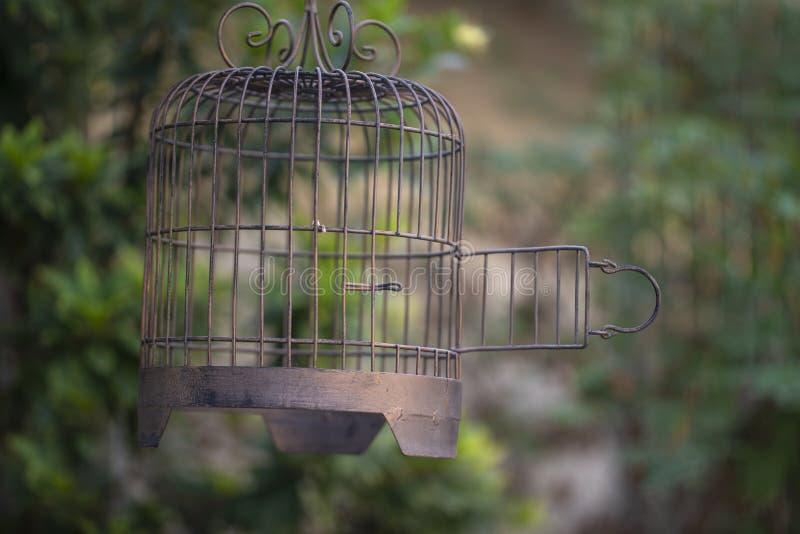 Open vrij enkel de vogel royalty-vrije stock foto