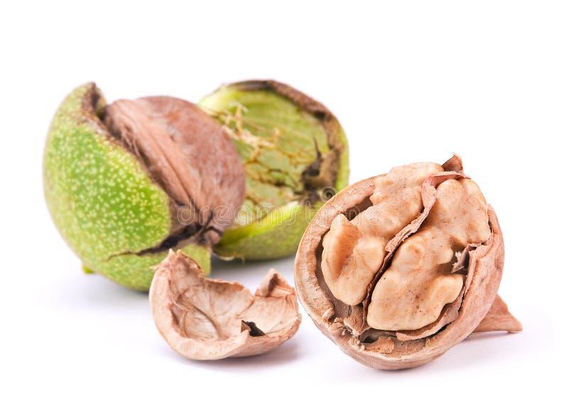 Open walnut stock image