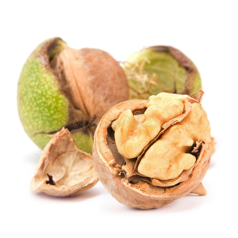 Download Open walnut stock photo. Image of white, image, open - 26124674