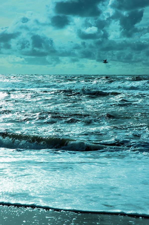Open water. Blue coloured ocean view with seagull