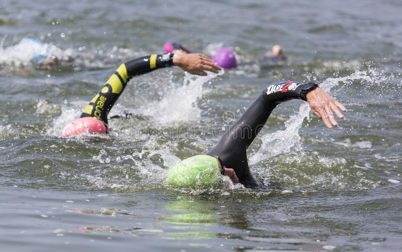 Open water swimmers. Two open water swimmers are in sync during a race. They are wearing a wetsuite to protect them from the cold water stock photo