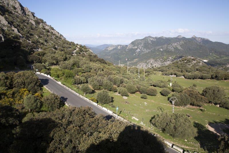 Open Weg in Grazalema Nationaal Park royalty-vrije stock foto's