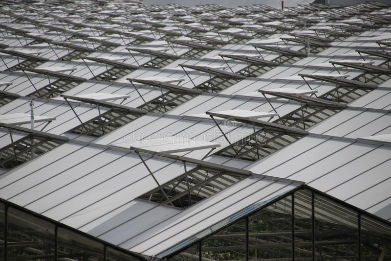 Open windows of greenhouses in a pattern in `s-Gravenzande, Westland, the Netherlands. Open windows of greenhouses in a pattern in `s-Gravenzande, Westland, the stock images