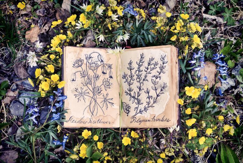Open witch diary book with drawings of healing plants royalty free stock image