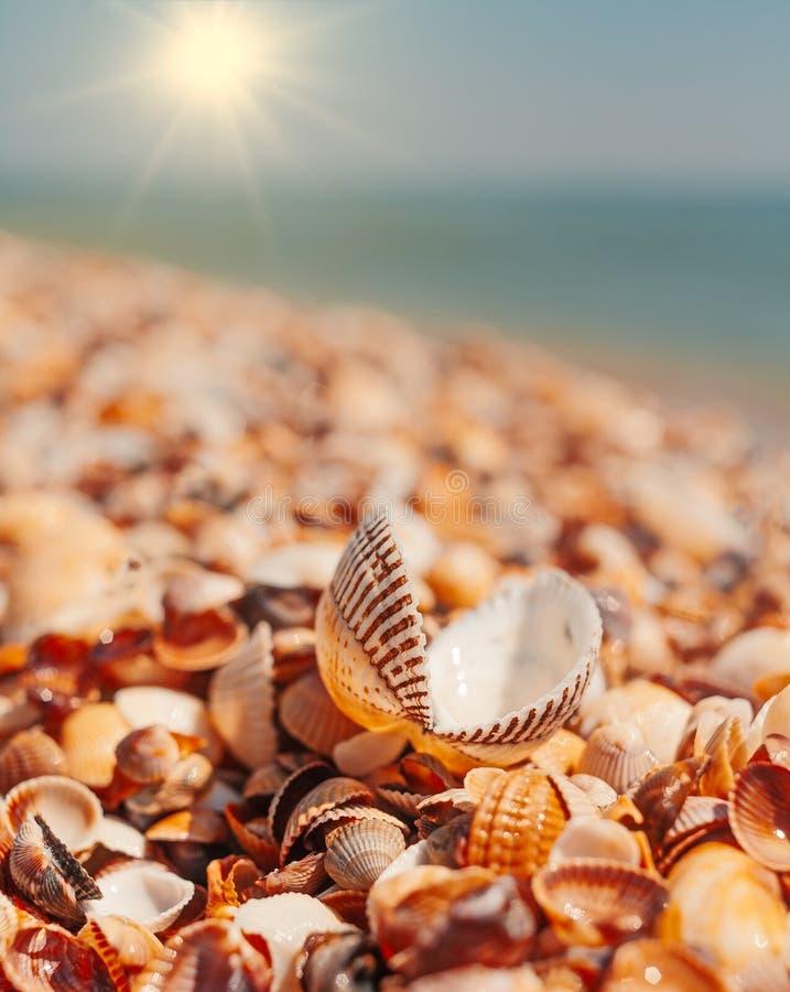 Open zeeschelp die op sallshells dekking voor horizonlijn liggen met heldere zon stock foto