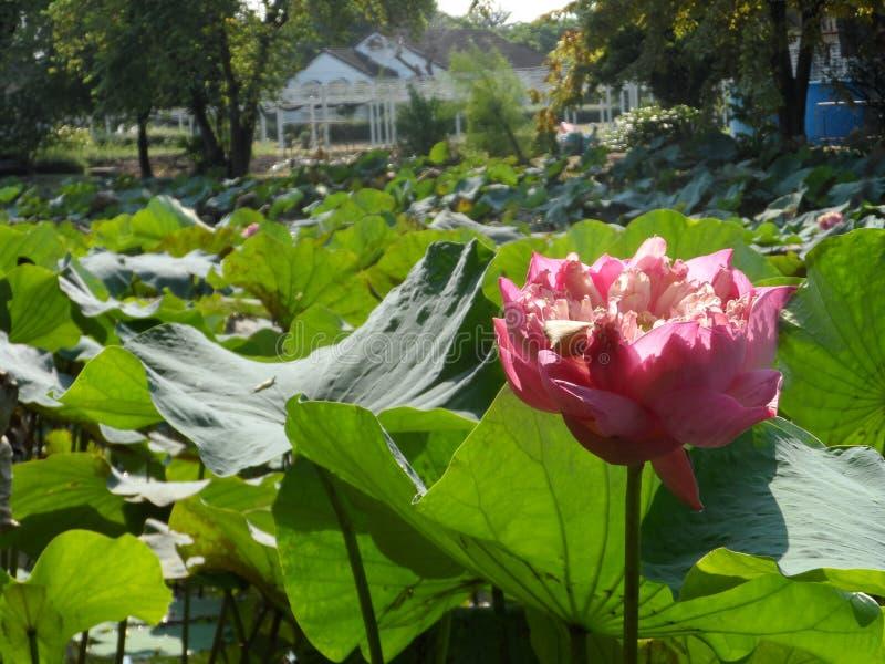 Openbaar Park Nr 9 in Bangkok Thailand royalty-vrije stock afbeeldingen