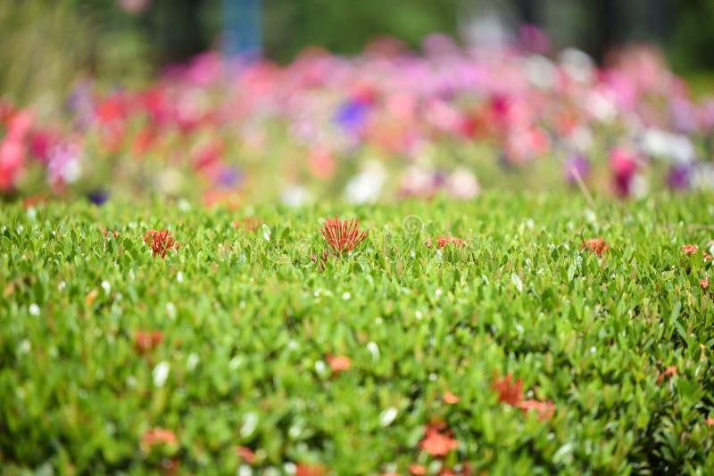 Openbare park Kleurrijke bloemen royalty-vrije stock foto