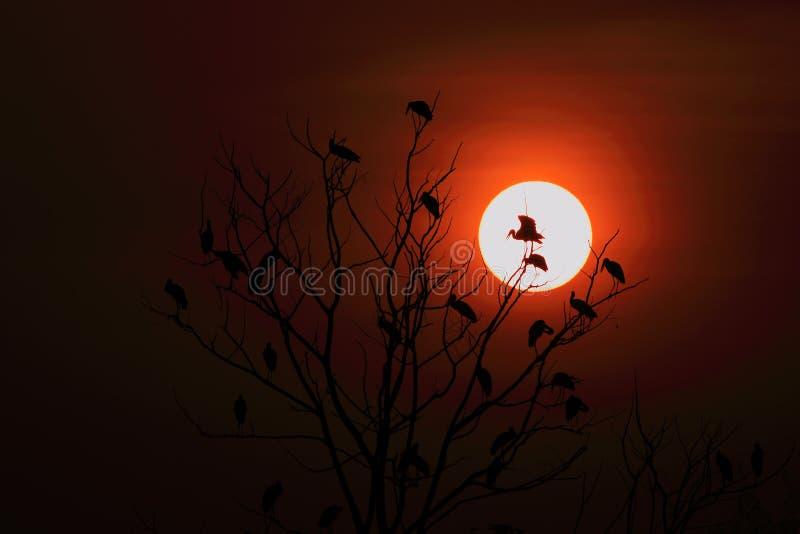 Openbill-Storchfamilie und -sonnenaufgang stock abbildung