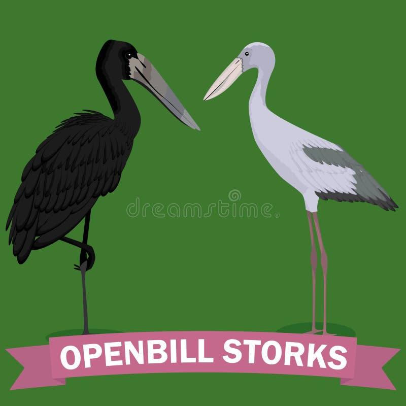 Openbill stork genus cartoon bird stock illustration