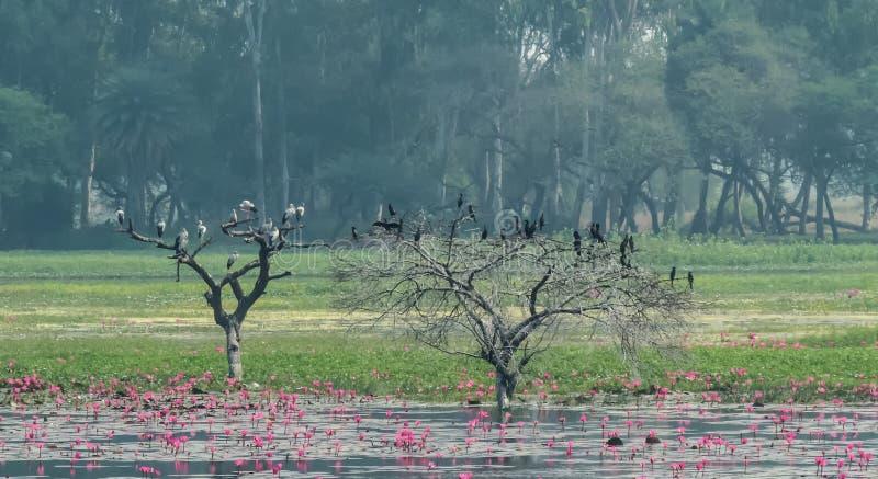 Openbill stork och kormoranfågel på träd royaltyfri fotografi