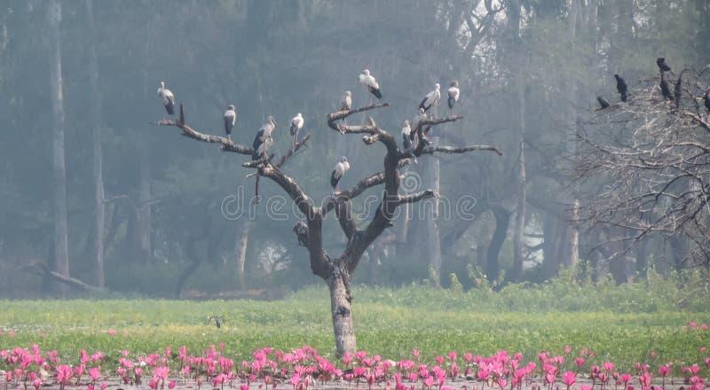 Openbill stork och kormoranfågel på träd royaltyfria bilder