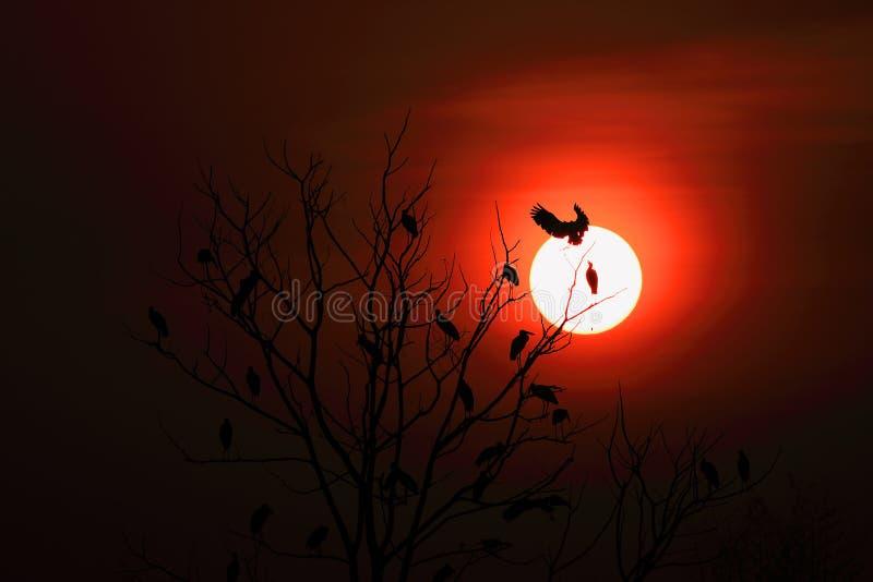 Openbill storkfamilj och soluppgång fotografering för bildbyråer