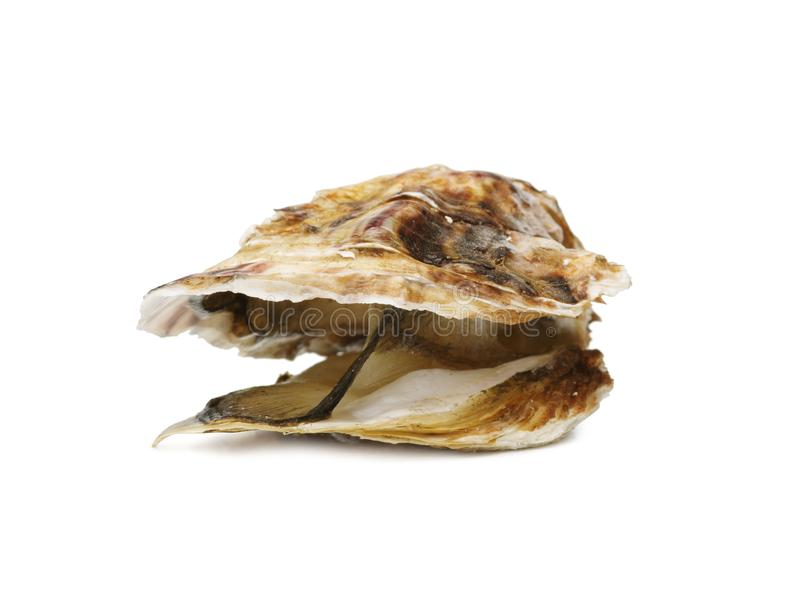 An opened fresh oyster isolated on a white background. Delicious tropical sea mollusk. The greatest delicacy. Copy space royalty free stock photo