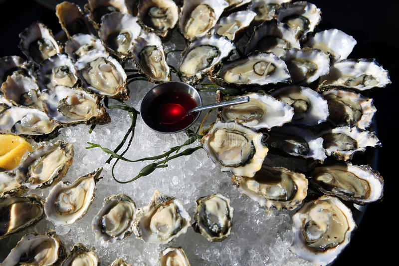 Opened oysters on ice royalty free stock photos