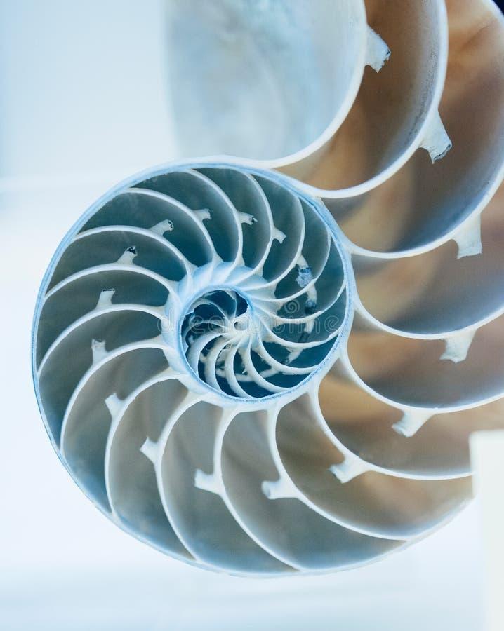 Opengewerkt van Nautilus-shell stock afbeelding