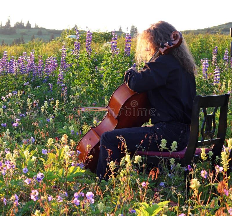 Openlucht cellopraktijk in de lente stock afbeelding
