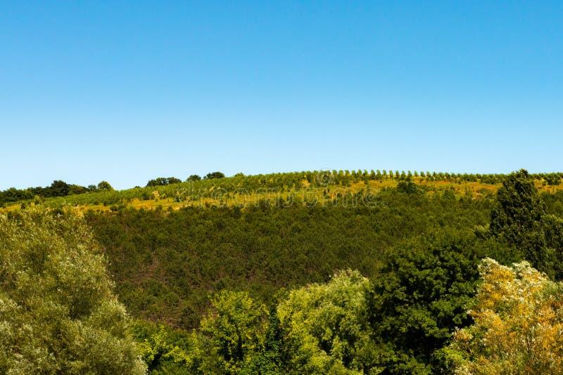 Openlucht landelijk landschap met dicht gebladerte stock fotografie