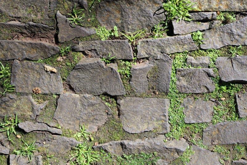 OpenluchtdieVloer van Asymmetrisch Grey Tiles met wat Gras wordt gemaakt die ertussen groeien stock afbeelding