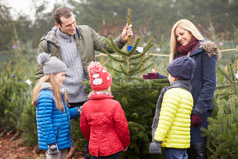 Openluchtfamilie die Kerstboom samen kiezen stock afbeeldingen