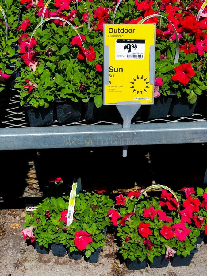 Openluchtinstallaties en bloemen op verkoop bij een ijzerhandel stock foto