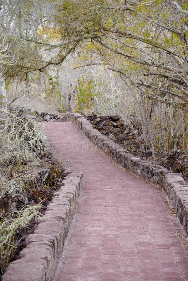 Openluchtmening die van baksteenweg door het bos tot de oceaan, op het Eiland Santa Cruz leiden van de Galapagos stock fotografie