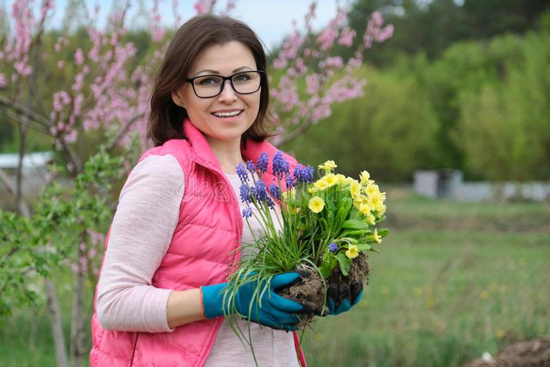 Openluchtportret van glimlachende vrouw op middelbare leeftijd in tuinhandschoenen met bloemen voor het planten, achtergrond van  royalty-vrije stock fotografie