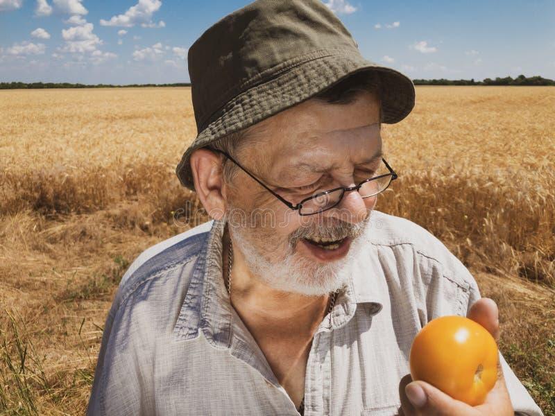 Openluchtportret van het gebaarde hogere landbouwer glimlachen en klaar om organische gele tomaat te eten royalty-vrije stock afbeeldingen