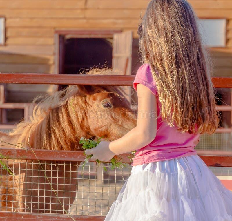 Openluchtportret van het jonge het glimlachen voedende paard van het kindmeisje op FA stock afbeeldingen