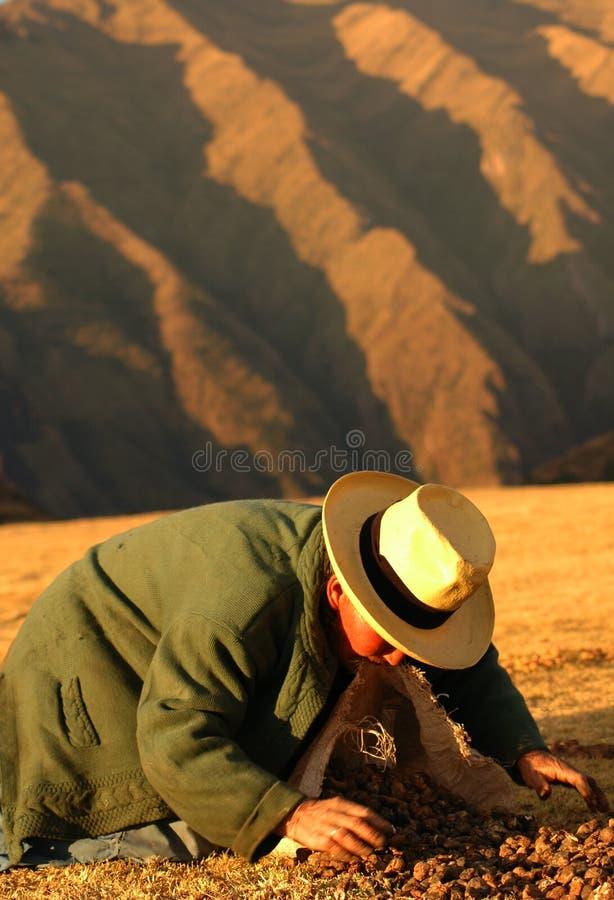Operai dal Perù fotografia stock