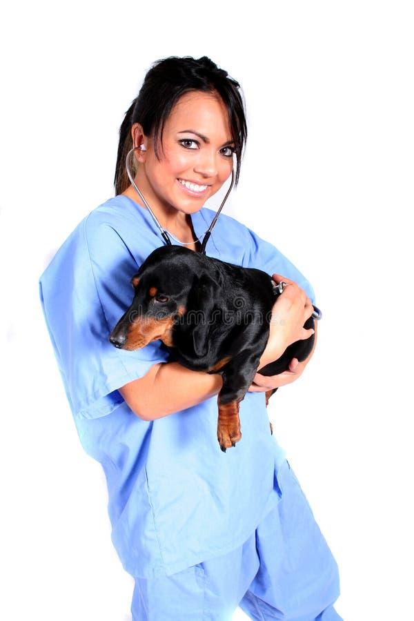 Operaio femminile di sanità con il cane fotografie stock