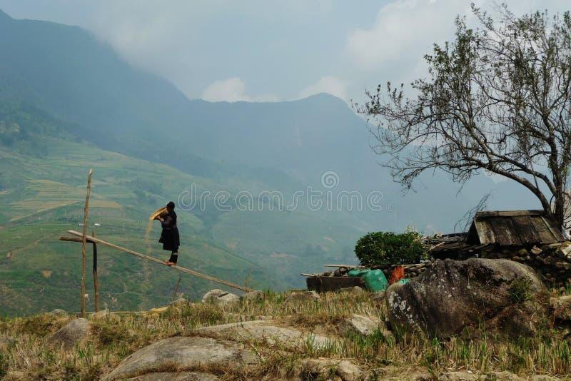 Operaio nella regione di Sapa, Vietnam del riso fotografia stock
