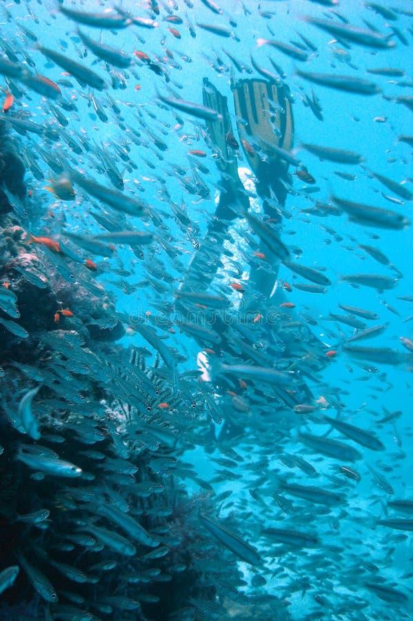 Operatore subacqueo immagini stock