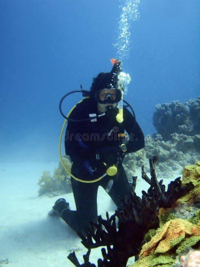 Operatore subacqueo al lato dell'albero di corallo nero immagine stock libera da diritti