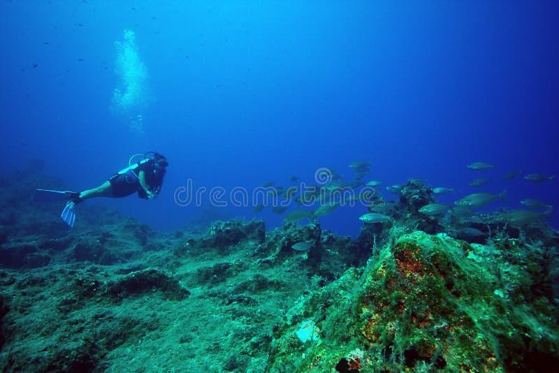 Operatore subacqueo & pesci fotografie stock libere da diritti