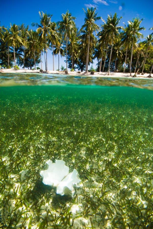 Operatore subacqueo cristallino di immersione con bombole dell'Indonesia del kapoposang delle coperture dell'acqua fotografia stock libera da diritti