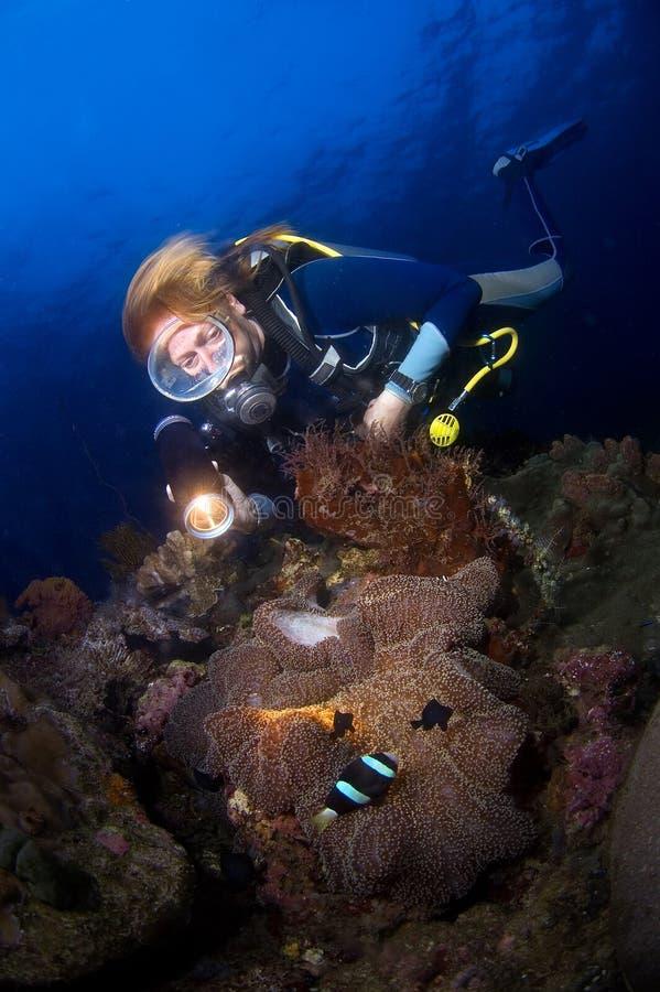 Operatore subacqueo della donna sopra il anemone. L'Indonesia Sulawesi immagini stock libere da diritti