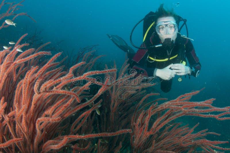 Operatore subacqueo di scuba con corallo rosso fotografia stock libera da diritti
