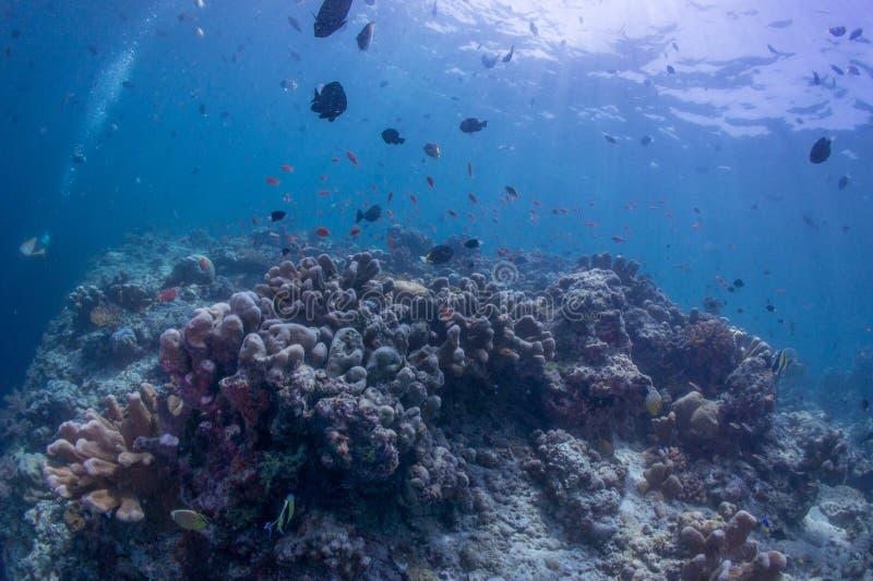 Operatore subacqueo di scuba con il fante di marina immagini stock