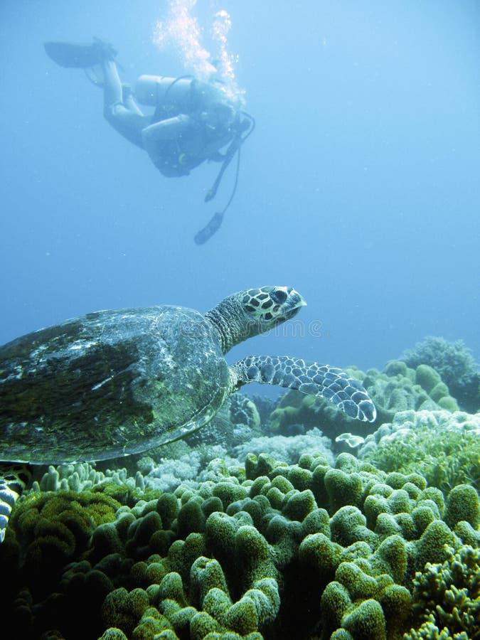 Operatore subacqueo di scuba e tartaruga di mare verde fotografie stock