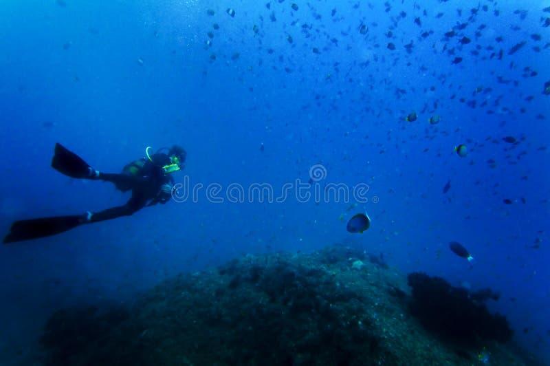 Operatore subacqueo di scuba subacqueo fotografie stock