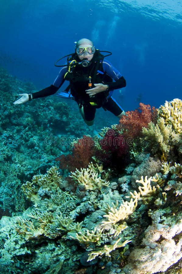 Operatore subacqueo di scuba sulla barriera corallina fotografie stock