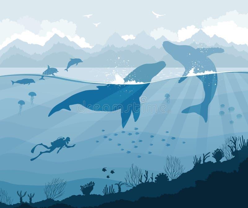 Operatore subacqueo e balene con i delfini, meduse, pesce illustrazione di stock