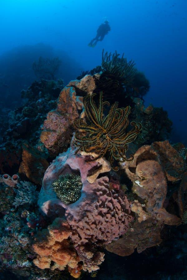 Operatore subacqueo e diversa scogliera fotografia stock