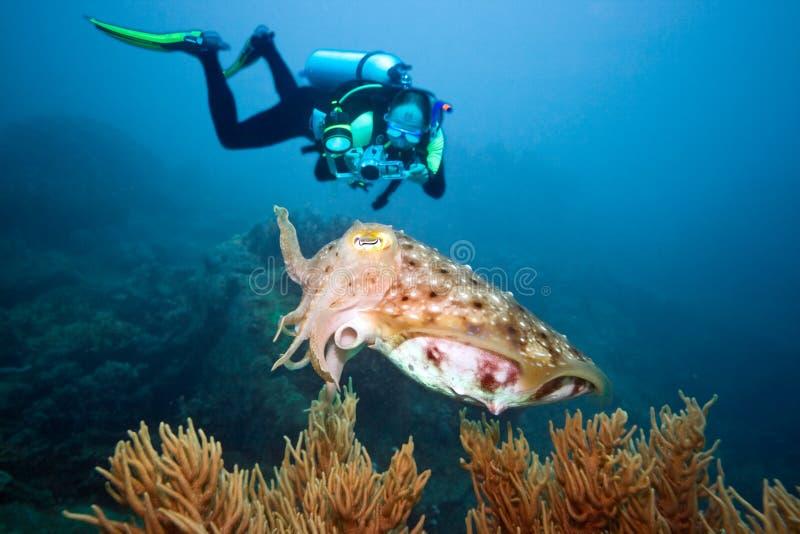 Operatore subacqueo e seppie fotografia stock libera da diritti